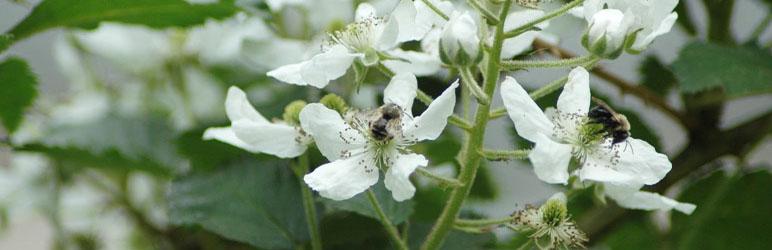 West Nyack Honey